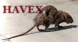 Havex RAT, original 'Street-rat' by Edal Anton Lefterov. Licensed under Creative Commons Attribution-Share Alike 3.0